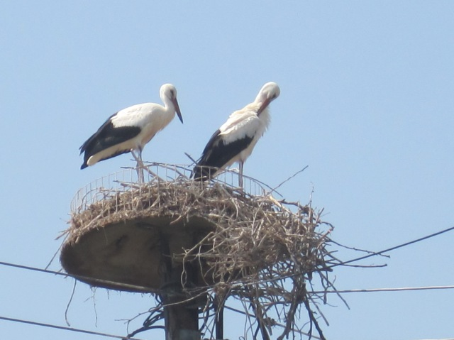 Storks somewhere north of Volos - the only ones we saw.