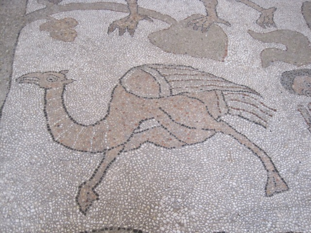 Part of the mosaic floor, cathedral at Otranto