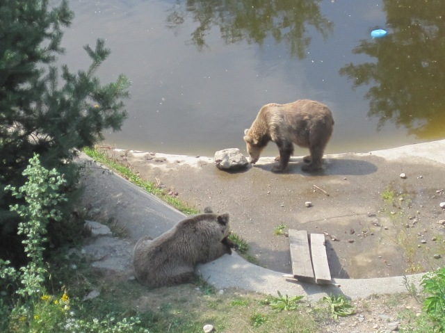At the Dancing Bears Rescue Park, Belitsa
