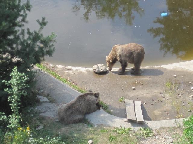 At the Dancing Bears Rescue Park, Belitsa