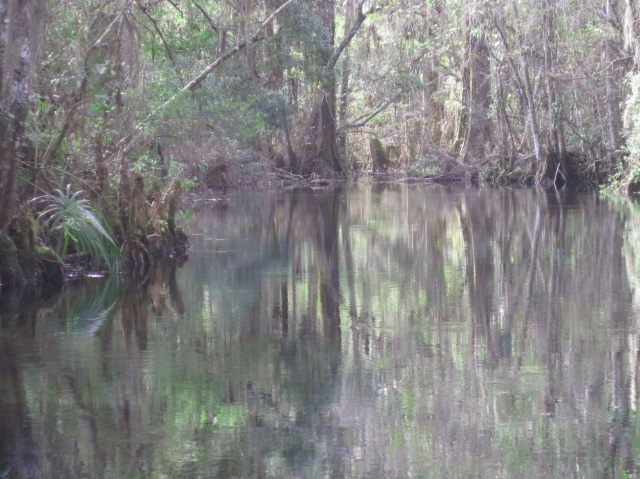 Reflection in the water at Wakulla Springs