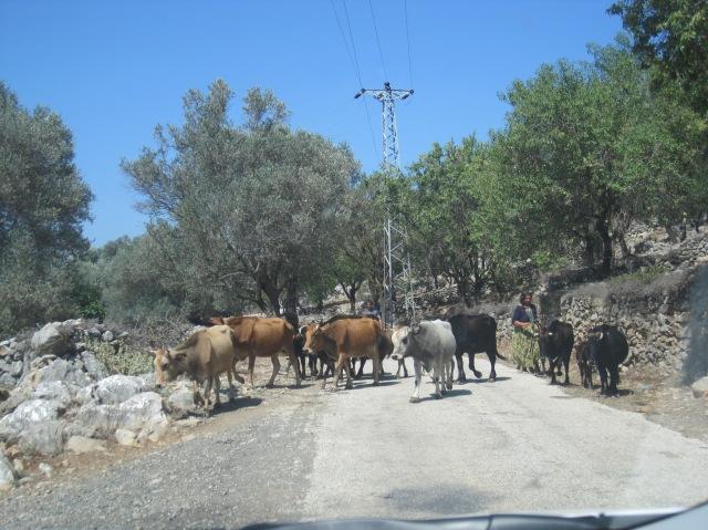 Hold up on the road on the Bozburun peninsula
