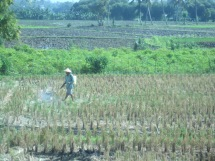 Agriculture on Lombok, not sure what he was spraying