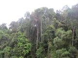 Rainforest from Kuranda Scenic Railway