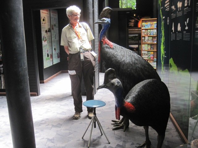 Cassowary models - they really are that tall