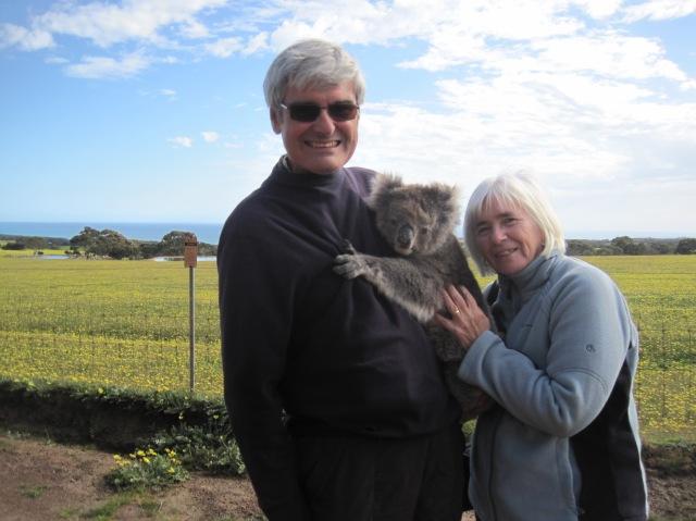 Koala at Paul's Place