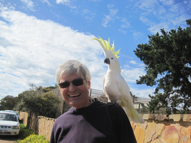Cockatoo at Paul's Place
