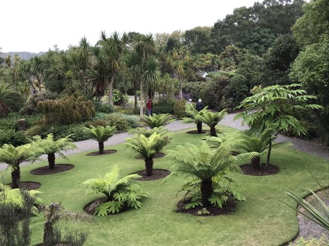 Tree ferns, Logan Botanic Garden